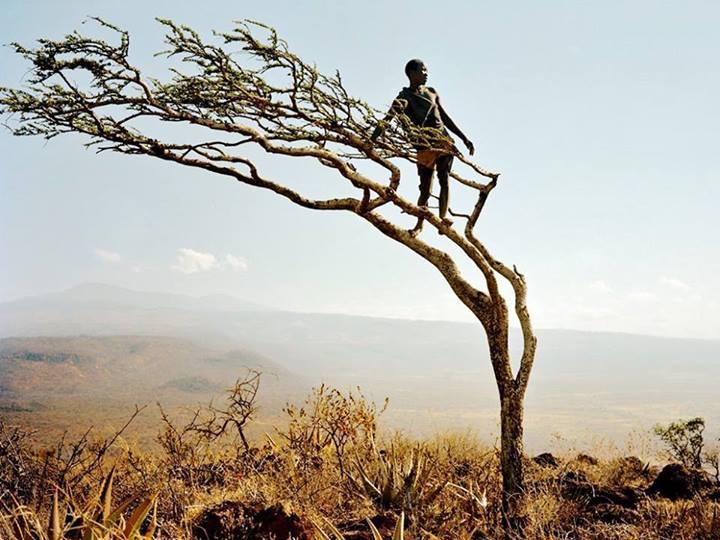 Africain arbre savane