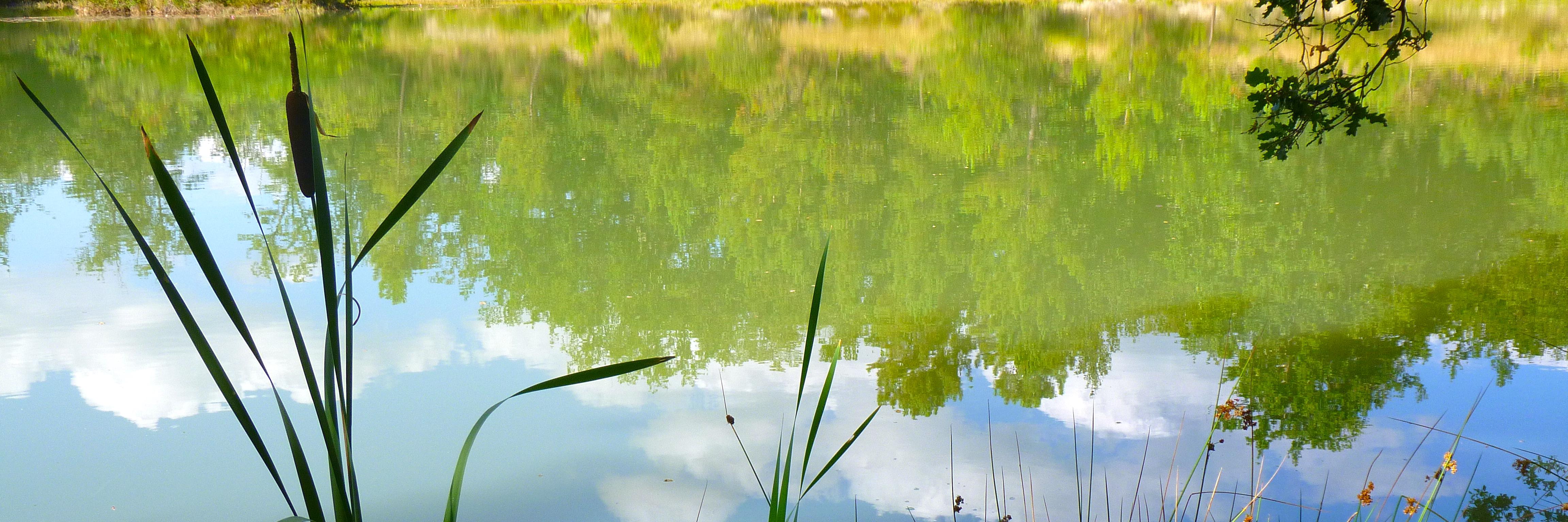 Eau, étang, détente